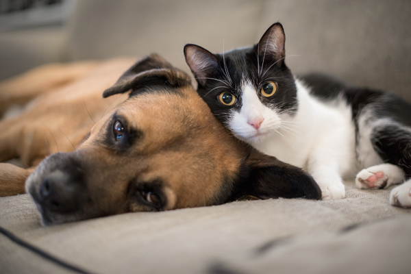 Dog and Cat Preventative Care in Portland, OR